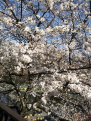林宏美 公式ブログ/清々しい朝だぜ 画像1
