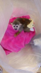 渋沢一葉 公式ブログ/ごみ袋の中に猿。 画像1