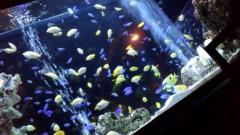 渋沢一葉 公式ブログ/熱帯魚。 画像1