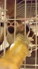 渋沢一葉 公式ブログ/猿。 画像1