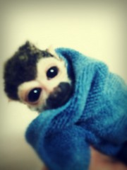 渋沢一葉 公式ブログ/美容院と猿。 画像3