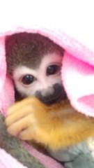 渋沢一葉 公式ブログ/猿と人間は一緒。 画像2