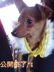 渋沢一葉 公式ブログ/10分間限定水着公開! 画像1