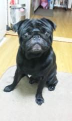 福井博章 公式ブログ/愛犬おにぎり君 画像1