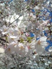 咲倉杏子 公式ブログ/サクラ満開っ 画像1