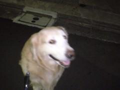 あっち幾三 公式ブログ/SUN君と夜の散歩 画像1
