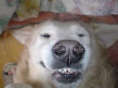 あっち幾三 公式ブログ/変顔犬 画像2