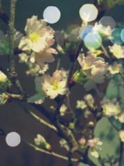 河野 春菜 公式ブログ/春の展覧会。 画像1