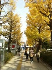 河野 春菜 公式ブログ/いちょうの木。 画像1