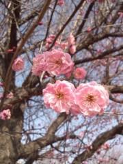 河野 春菜 公式ブログ/春のお便り。 画像1