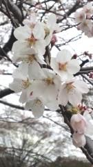 川久保秀一 公式ブログ/桜 画像2