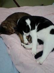 川久保秀一 公式ブログ/猫兄弟 画像1