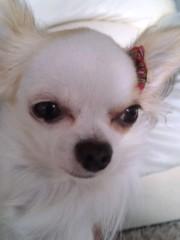 櫻井杏美 公式ブログ/愛犬 画像1