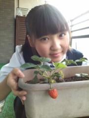 櫻井杏美 公式ブログ/いちご 画像1