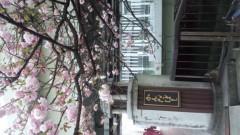 OZグレートライブ、ズキトモ揃って。 公式ブログ/桜がキレイ! 画像2