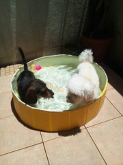 大沢樹生 公式ブログ/ベビハニ、プール遊びですっ♪ 画像1