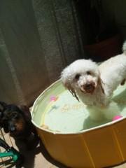 大沢樹生 公式ブログ/ベビハニ、プール遊びですっ♪ 画像2
