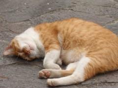 志村貴博 公式ブログ/猫さんたちですよ 画像1