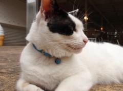 志村貴博 公式ブログ/猫さんたちですよ 画像2