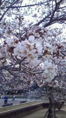 井内志保 公式ブログ/春 画像1