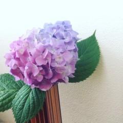 井内志保 公式ブログ/紫陽花 画像1