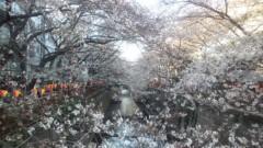 井上清三 公式ブログ/中目黒の桜 画像1
