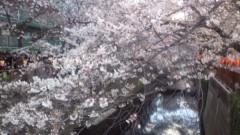 井上清三 公式ブログ/中目黒の桜 画像2