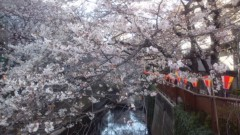 井上清三 公式ブログ/中目黒の桜 画像3