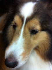 亀岡久世 公式ブログ/愛犬2 画像1