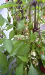 小野まりえ 公式ブログ/雨蛙。。。 画像1