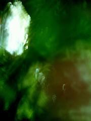 小野まりえ 公式ブログ/黄緑色のやさしい子。。。 画像1