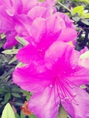 小野まりえ 公式ブログ/甘い匂い。。。 画像1