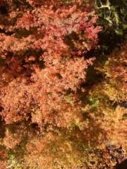 葵うらら 公式ブログ/紅葉の写真をo(^_-)O 画像1