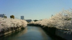 葵うらら 公式ブログ/目黒川の。。。 画像1