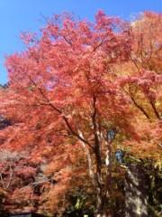 葵うらら 公式ブログ/紅葉祭り(≧∇≦) 画像1