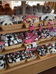 葵うらら 公式ブログ/癒しのパンダ(≧∇≦) 画像2
