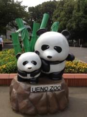 葵うらら 公式ブログ/癒しのパンダ(≧∇≦) 画像1
