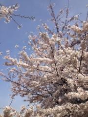 葵うらら 公式ブログ/今朝のさくら(((o(*゚▽゚*)o))) 画像1