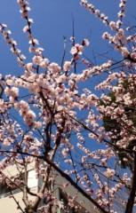 葵うらら 公式ブログ/春を発見*\(^o^)/* 画像1
