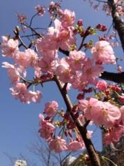 葵うらら 公式ブログ/すっかり、春*\(^o^)/* 画像1