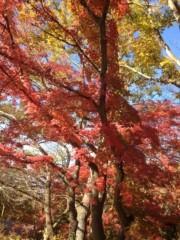 葵うらら 公式ブログ/紅葉の写真をo(^_-)O 画像3
