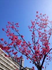 葵うらら 公式ブログ/新しい命☆★☆ 画像2