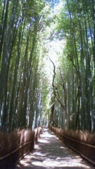 """葵うらら 公式ブログ/""""竹林の道"""" 画像1"""