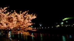 葵うらら 公式ブログ/夜桜(´∀`) 画像1