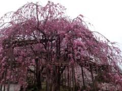 葵うらら 公式ブログ/清水寺へ(*^◯^*) 画像2