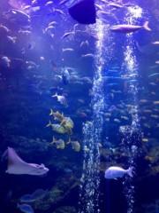 葵うらら 公式ブログ/京都水族館o(^▽^)o 画像1