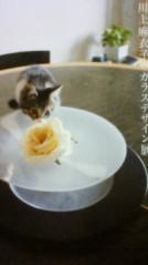 葵うらら 公式ブログ/『ガラスデザイン展』 画像1