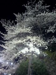 チェウニ 公式ブログ/夜桜が綺麗ですね(^.^) 画像2