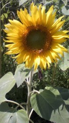 チェウニ 公式ブログ/2011-08-10 07:58:37 画像2