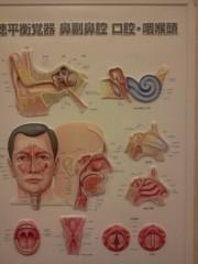 チェウニ 公式ブログ/耳鼻咽喉科 画像1